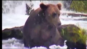 Bear 151 Walker 2019, video by Deanna Dittloff