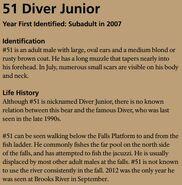 DIVER JR 51 INFO 2016 BoBr PAGE 61 INFO ONLY