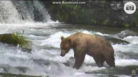 The first displacement at the falls June 24, 2016 603 displaces 51 Diver Jr video by Ratna