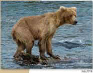 WHO UNIDENTIFIED SOW 2019.07.10 w 2 SPRING CUBS 39 500 MAYBE LOVETHEBEARS POSTED 2020.01.28 08.56 01-03 GOLDILOCKS 2020.01.28 10.08 COMMENT PIC ONLY