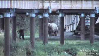 719 jumps 821 No playing with my cubs 9 22 19 by LuvBears (Lower River North cam view)-1