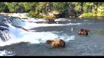 Dominance @ Brooks Falls, Katmai National Park July 2, 2019 by Lee Block (747 & Who? 68 Maybe?)-1