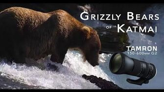 Grizzly Bears of Katmai 4K - Tamron 150-600 by Charley Voorhis 2018 season