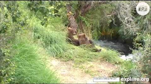 402 and 3 spring cubs 07 24 2013 video by 60windy