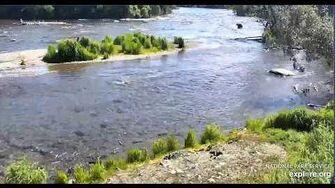 Bear Walker 151 in riffles Brooks Falls Katmai, video by Erum Chad