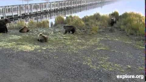 Holly and Cubs Meets Mom and 3 Cubs 09.25