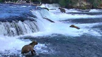 Brooks Falls Brown Bears Cam 07-29-2018 16 01 30 - 17 01 31 Explore Recorder