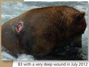 83 WAYNE BROTHER PIC 2012.07.xx w VERY DEEP WOUND RIGHT SIDE