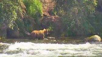Brooks Falls Brown Bears Cam 06-29-2018 12 31 23 - 13 13 56 Explore Recorder video
