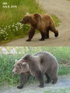2014 FAT BEAR TUESDAY 2014.09.30 10.30 KNP&P FB POST 284 2014.07.06 vs 2014.09.06 PHOTOS ONLY
