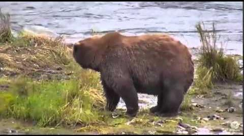 Bear 289 October 15, 2015 video by Mickey Williams