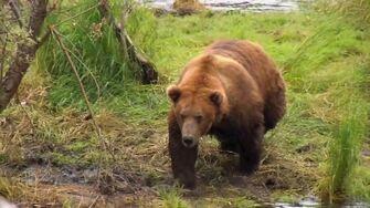 The Real Bears of Katmai National Park 2012 by J