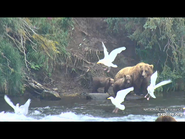 505 PIC 2018.08.06 w 2 SPRING CUBS GOLDILOCKS POSTED 2019.06.05 16.34 02