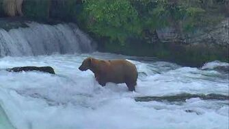 Brooks Falls Brown Bears Cam 07-11-2018 08 31 17 - 09 31 18 Explore Recorder