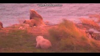 482 3 with windy pink glow 2018 09 29 10 06 51 320, video by Casper Trout