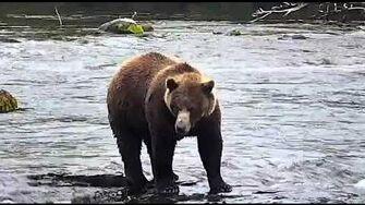 Bear 812 2019 Season by Deanna Dittloff (aka deelynnd)