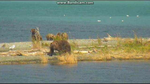 273 Passes 94 & Cubs on Spit 2018-10-04 by Birgitt