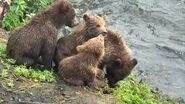 402 PIC 2018.08.06 4 SPRING CUBS SHEL