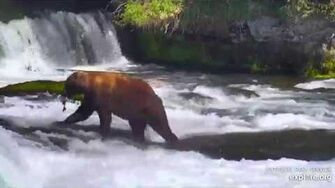 27 Jun 2019 89 Backpack Takes His Fish to Go, video by mckate