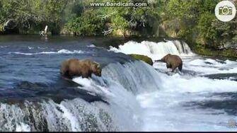 505 catches a salmon lip fishing 7 5 2017, video by Ratna Narayan