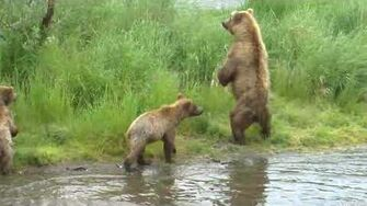 Cubs at the Falls July 2017 video by Deanna Dittloff