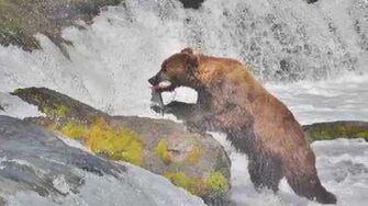 Brooks Falls, Alaska 2011 by wildatheartbill