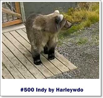 Harleywdo indy