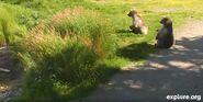 BEADNOSE 409 PIC 2013.08.24 14.39 409s YEARLINGS RIVERROCK SNAPSHOT 01