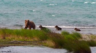 Katmai National Park, Alaska, video by Kevin Forey-0