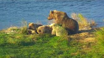 28 Sep 2018 482's Cubs Snuggle, video by mckate
