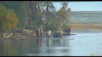 482 Brett and coy get surprised by bear at point 9 19 2018, video by Lani H
