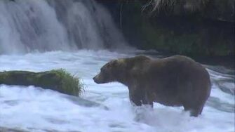 Brooks Falls - Katmai National Park, Alaska Cam 09-13-2015 09 16 35 - 09 21 30