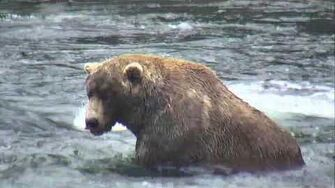 Brooks Falls Brown Bears Cam 09-22-2018 16 00 10 - 16 59 56 Explore Recorder-0