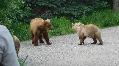 284 and cubs in camp 7 24 17 video by Scammin