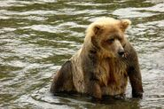 410 INFO 2015.07.23 KNP&P FACEBOOK POST BEARCAM BEAR PROFILE 410 PIC ONLY