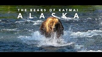 The Bears of Katmai National Park, ALASKA, video by Jaysea C-3