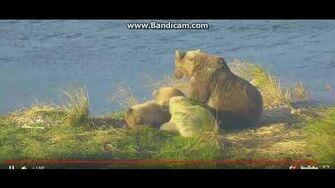 Beautiful sow 482 and 3 cubs ( Smores) P4 28 9 18 by Ratna Narayan