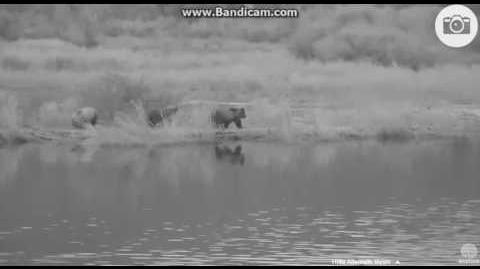 Heartwarming video of DIVOT and THREE cubs Sept 5, 2016 Morning P1 by Ratna