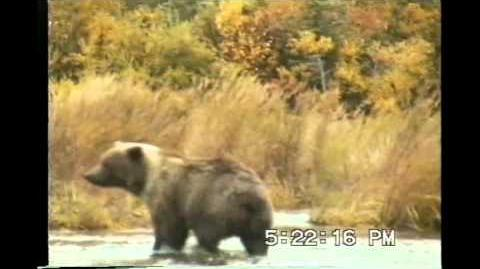 Jim & Jim Fly Fishing Brooks River Katmai National Park Alaska September 1992 video by 1spooned