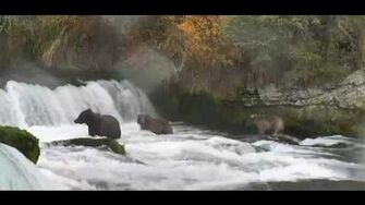 2016 10 12 13 35 48 504 & cubs by Cheryl B (yearlings are btb 821 & 831)-0