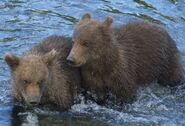BEADNOSE 409 PIC 2016.07.19 20.07 HER 2 SPRING CUBS 909 & 910 TRUMAN EVERTS POSTED 2020.02.02 08.13