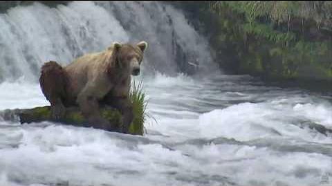 274 Overflow on rock Brooks Falls 06