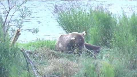 08.09.2017 - 480 Otis Asleep on the Island video by Brenda D