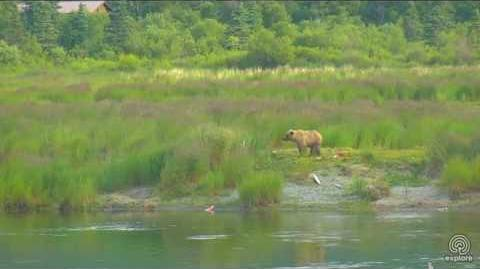 Little Bear 610, July 23 and 24, 2017 video by Melissa Freels