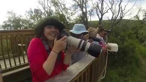 Gregory Katmai Brooks Falls July 2014 video by 117jmg