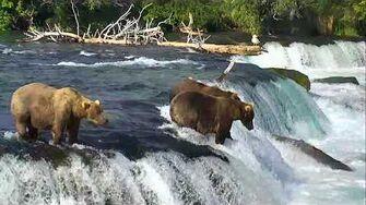 Brooks Falls Brown Bears Cam 07-29-2018 19 01 34 - 20 01 35 Explore Recorder