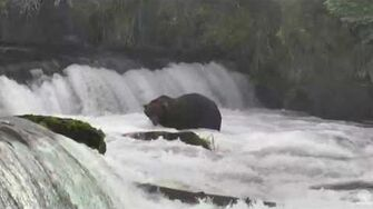 10 20AM 082816 474 and 879 in the fa poolr Katmai National Park by Mickey Williams