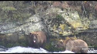 719 and another subadult on far rock wall 10 8 2018 by Lani H (720? 820? with 719)-1
