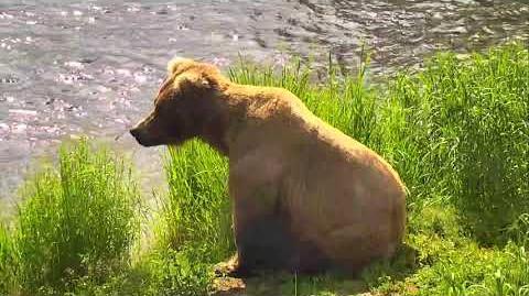 Brooks Falls Brown Bears Cam 07-01-2018 12 31 24 - 13 31 25 Explore Recorder