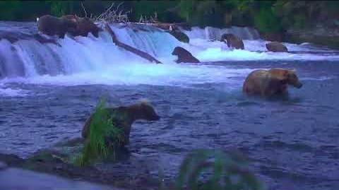 17 Jul 2018 503 Dares to Splash 480 Otis ~ Falls Low View Cam by McKate